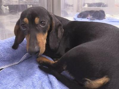 Pet hospital covers surgery cost after boy caught on camera severely beating puppy