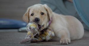 Netflix Releases a Dog-umentary About Service Dogs in Training