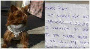 Dog's Ashes Are Stolen, Then Returned Weeks Later With A Heartfelt Note