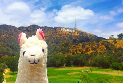 Unicorns are finally dead - this summer is going to be all about llamas