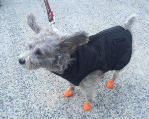 Dog Supplies You Need On-Hand for Any Weather Emergency