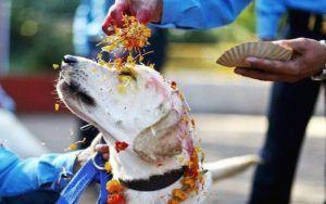 Annual Festival In Nepal Celebrates The Sacred Bond Between Humans & Dogs