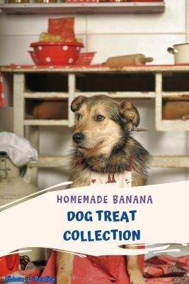 Homemade Banana Dog Treat Collection