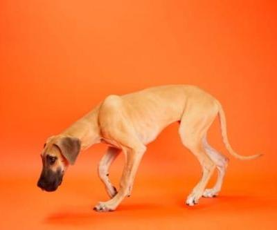 What Are The Benefits Of Coconut Oil For Dogs?