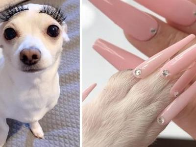 New Dog Grooming Trend Excites Some & Outrages Others