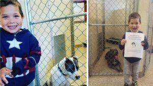 Child's Act Of Kindness Inspires Others To Pay It Forward For Shelter Dogs