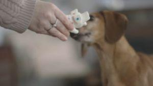 Dog Reunites With His Favorite Toy After 5 Years