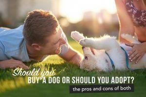 Should You Buy a Dog or Should You Adopt