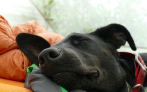 8 Ways To Make Your Rescue Dog As Comfortable As Ever