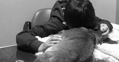 This boy's emotional tribute to his dog reminds us it's okay to be sad