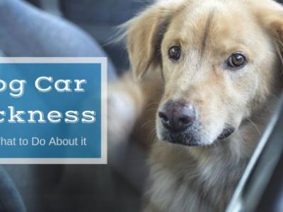 Dog Car Sickness and What to Do About It