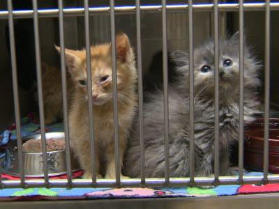 'We need help': Sacramento County animal shelter is overcrowded, official says