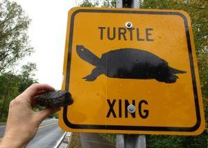 Watch Out for Turtles on Roadways this Spring!
