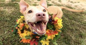 Families Are Welcoming Shelter Dogs Into Their Homes for Thanksgiving