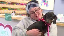 Dog Recovering After Being Bound With Tape, Thrown From Car Into Frigid Ditch