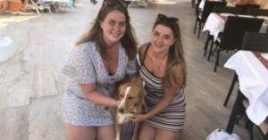 Stray Followed Woman Everywhere On Vacation, So Now She's Taking Her Home!