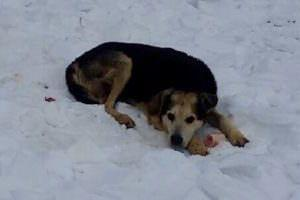 Woman Sleeps Outside In The Freezing Cold To Earn The Trust Of A Stray Senior Dog