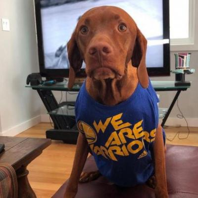 Vizsla Breed Information Guide: Quirks, Pictures, Personality & Facts