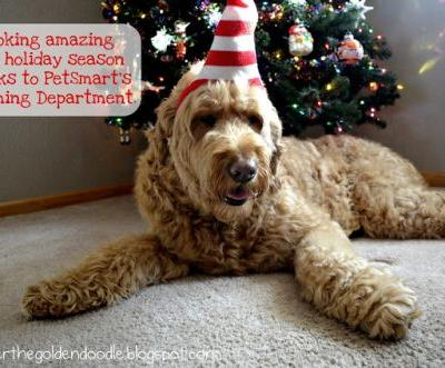 Get Your Dog Ready for the Holidays with PetSmartGrooming