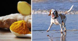 6 Ways Turmeric Can Benefit Your Dog's Health