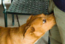 Simple Solutions to Dog Behavior Problems During the Holidays