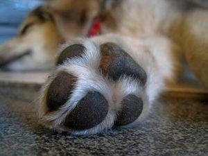 3 Helpful Tips To Make Your Dog's Nail Trimming Session Easier