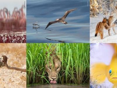 14 of the Best Photos from Wildlife Photographer of the Year 2018