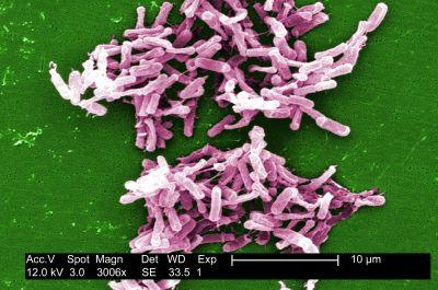 Seres Dissects Failed Microbiome Drug Trial, Suggests Changes to FDA