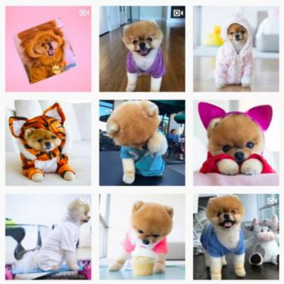 Is a Pomeranian the Right Dog Breed for You?