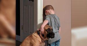Loyal Dog Won't Let His Brother Suffer Time-Out Alone