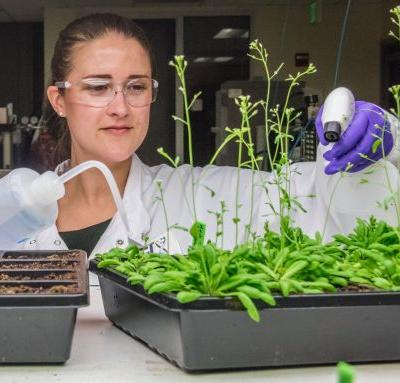 Breakthrough Technique for Studying Gene Expression Takes Root in Plants