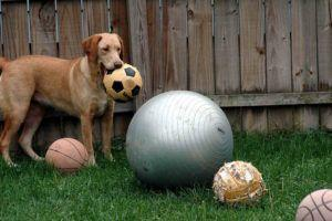 """Dog Takes """"Smug"""" Photo After Swallowing Costly Ball"""