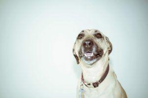Your Dog's Facial Expressions Might Not Mean What You Think They Do