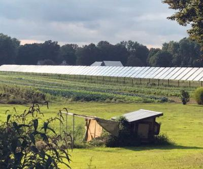 Agrivoltaics: Solar Panels on Farms Could Be a Win-Win