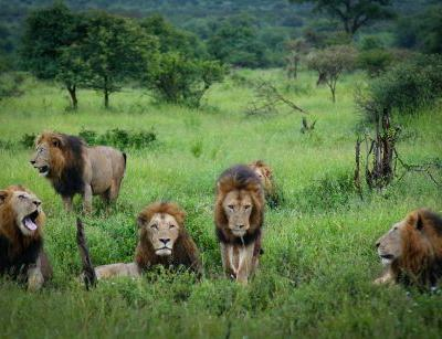 Lions kill suspected poachers on game reserve, site's owner says