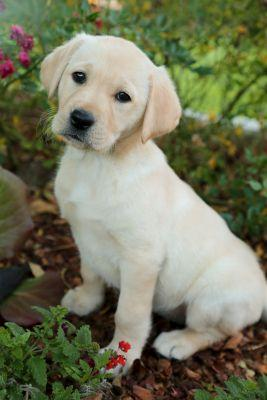 Puppy Babs and GFWC Moving our Mission Forward