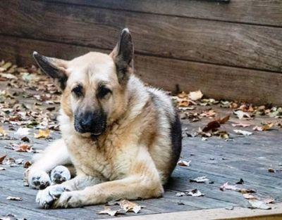 Love Never Grows Old at Old Friends Senior Dog Sanctuary