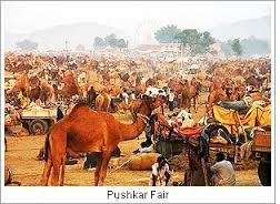 Polo Festival in Gujarat boost domestic tourism