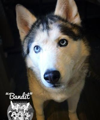 Remembering Bandit on Her First Rainbow Bridge Annivesrary