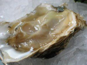 Oyster Linked Norovirus Slams Pacific Northwest