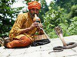 Playing the Indian snake charmers' flute could boost premature babies' brain development