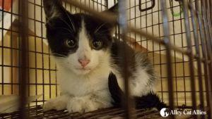 Alley Cat Allies Rescues Kitten Climbing in Cars' Wheel Wells