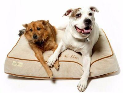 Giving Your Dog This Luxury Bed Helps to Reduce Pet Overpopulation