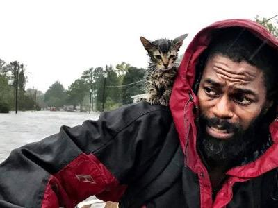 Kitten named Survivor clings to owner amid flood rescue