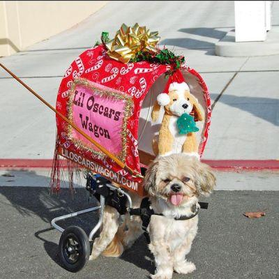 Dogs on Wheels Roll Into the Spotlight Thanks to Lil Oscar's Wagon