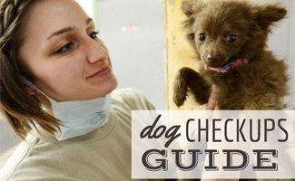 The Importance of an Annual Dog Check Up