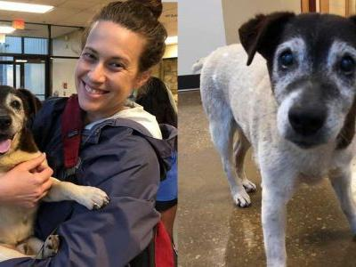 Woman reunited with dog that was missing for 4 years