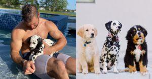 Look! Tim Tebow Has A Trio Of Puppies!