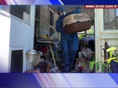 36 Cats Now Rescued from Filthy Des Moines Home, 70 Year Old Woman Arrested