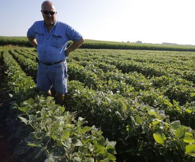 Soybeans get whacked as Trump hits China with tariffs on $50 billion worth of goods
